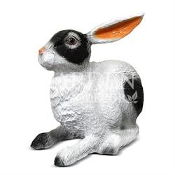 Заяц ушастый